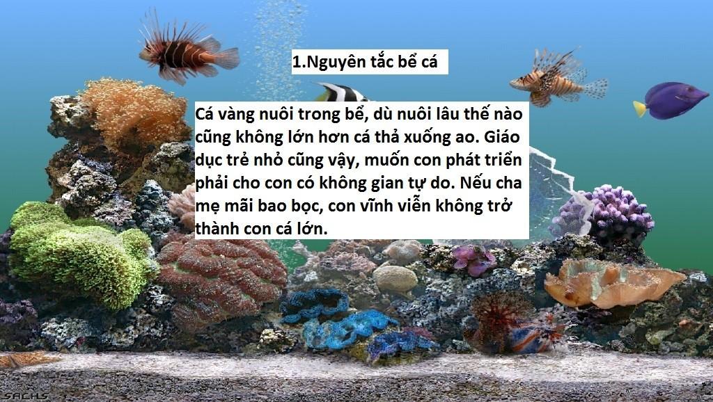Nguyên tắc 1: Nguyên tắc bể cá