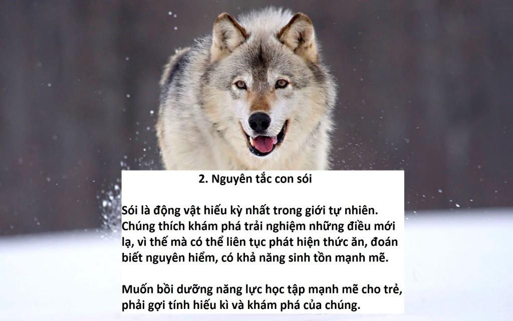 Nguyên tắc 3: Nguyên tắc con sói